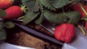 Mehr zu Bewässerung im Obstbau