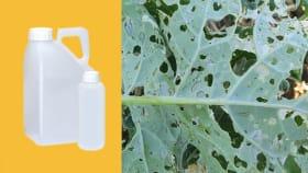 Insektizide für Zuckerrüben