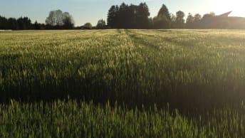 Bodenfruchtbarkeit und Düngung