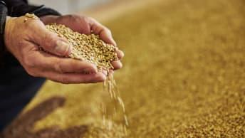 Handel ökologischer Erzeugnisse