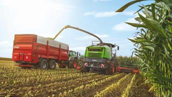 Ertragsprognose Mais