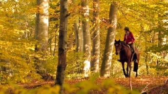 Herbstsparwochen