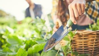 Praktischer Gartenkalender: Tipps für den Mai