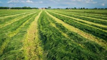 Beste Qualität & maximale Erträge durch Grünlandnachsaat