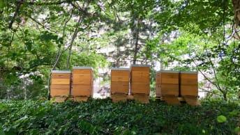 1. Stadt-Honig in Bio-Qualität