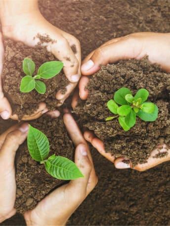 Bild zeigt drei Hände, die etwas Erde mit einer Pflanze halten