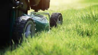 Die richtige Pflege für einen gesunden Rasen