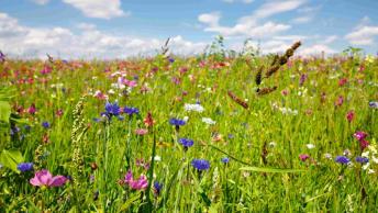Artenreiche Blühmischungen