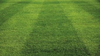 Profisegment für Rasenmischungen im Hausgarten- und Profibereich