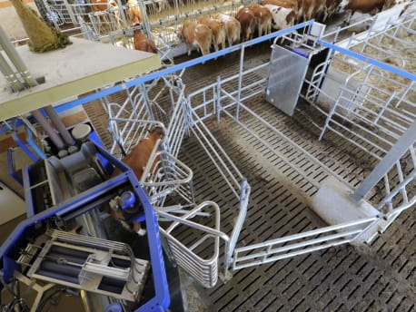 Einrichten: Stalleinrichtung im Rinderstall