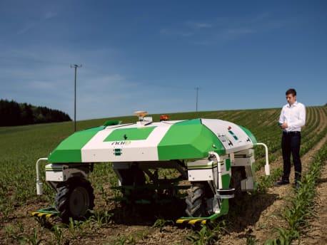 Hackroboter im Mais