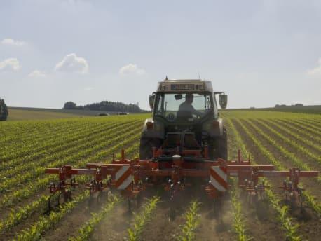 Intelligente Unkrautbekämpfung im Mais