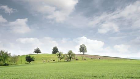 optimaler Grünlandbestand