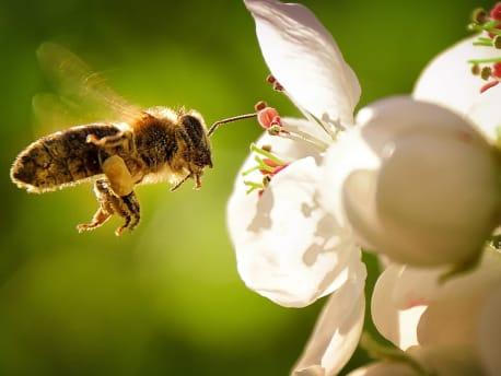 Angebote für: Bienenfutter