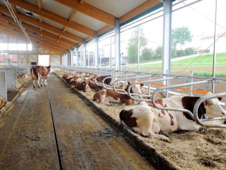 Ein gutes Klima im Stall schafft beste Bedingungen für die Tierhaltung
