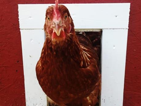 Produkttest Glückliche Hühner