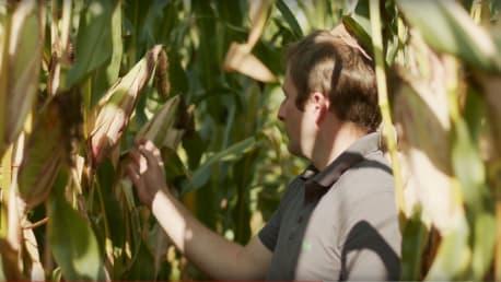 Maissaatgut vom BayWa Schwerpunktsortiment mit Reifegruppe Mittelspät