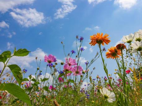 Aktion: Blühflächen-Gutschein zum Verschenken