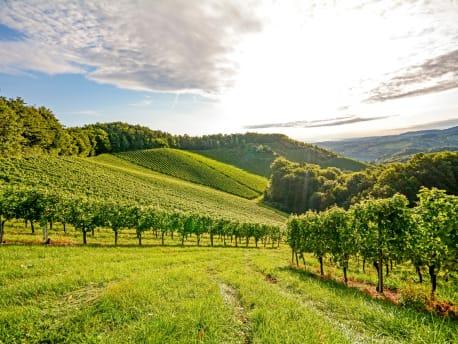 Technik für den Einsatz im Obst- und Weinbau
