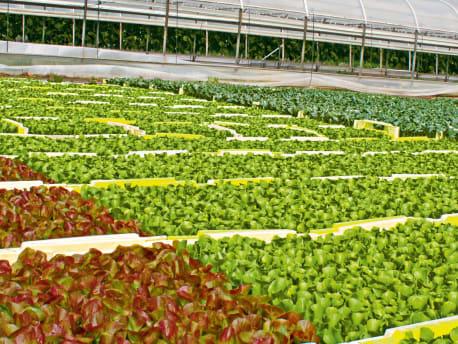 Qualitäts-Saatgut und Betriebsmittelfür Gemüseerzeuger