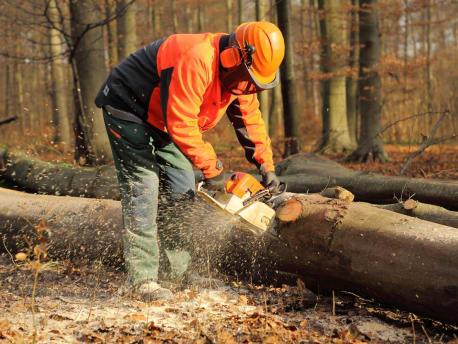 Holzfäller in Schutzkleidung zersägt einen Baumstamm