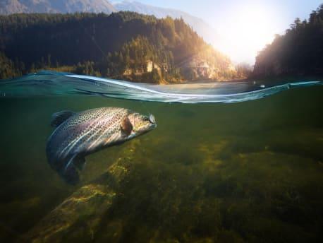 Fisch-an-der-Angel
