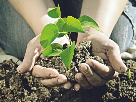 Pflanze-und-Erde-in-Händen