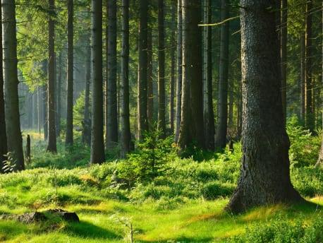 Wald am Tag