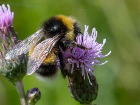 Förderrichtlinie Insektenschutz und Artenvielfalt