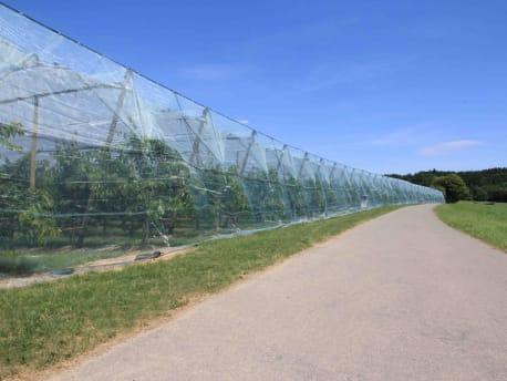 Schutznetze gegen Wind, Insekten und Vögel