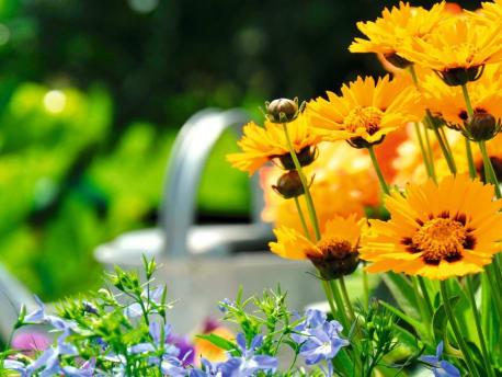 Angebote für: die Gartensaison