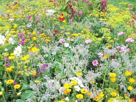 Blüh- und weitere Mischungen