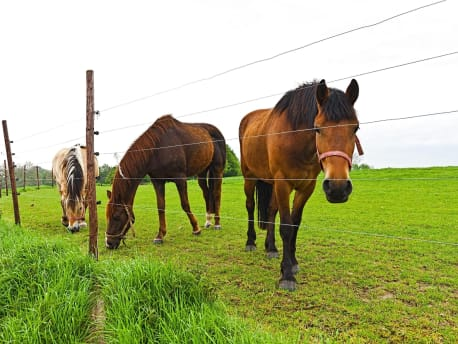 Pferde auf Weide und Weidezaun