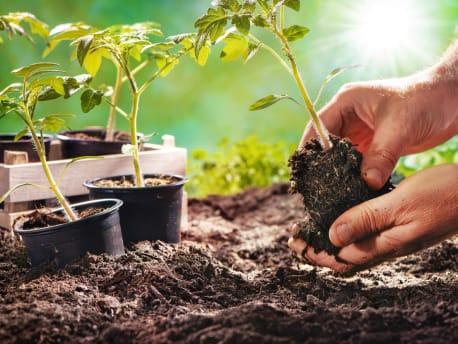 pflanzen-erde-gartnern
