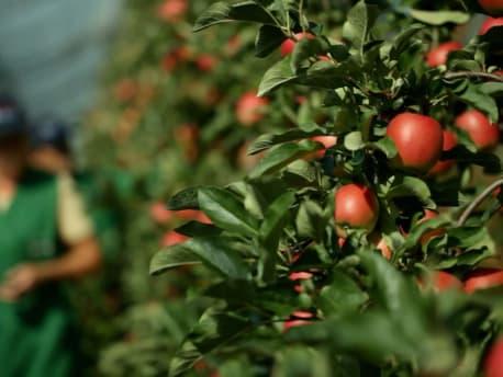 Alles für den Obstbau: Unsere Dienstleistungen und Sortimente im Agrarshop