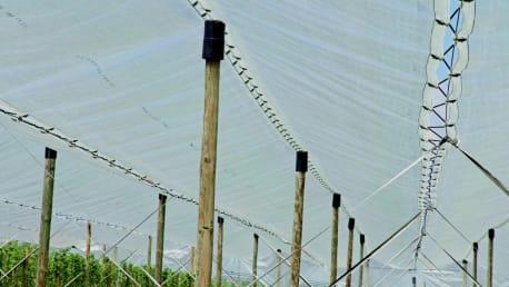 BayWa Roof-System Regenschutz für Obstplantagen