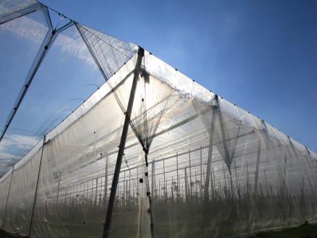 Käfig-Systeme im Obstbau