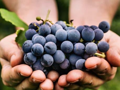 Alles für den Weinbau: Unsere Dienstleistungen und Sortimente im Agrarshop