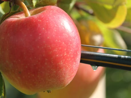 Apfelkulturen mit Tropfbewässerung ausgestatten