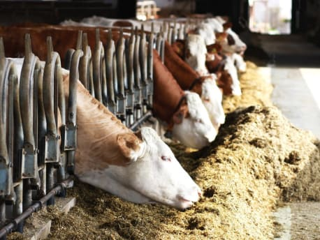 Futtermittel und Tierhygiene