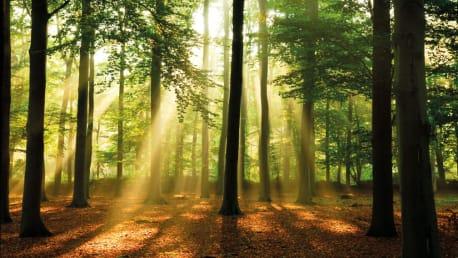 Ökologische Vorteile