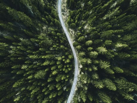 Road in a Wood, picture taken from above