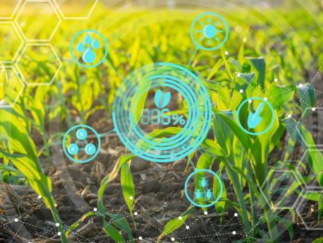 Feld mit Pflanzen und Grafik
