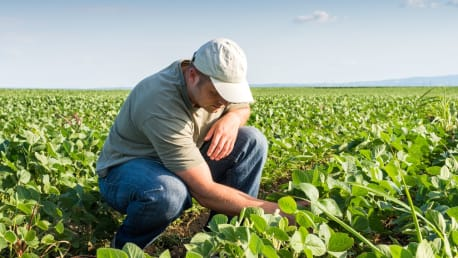 The picture shows a soy farmer in a field