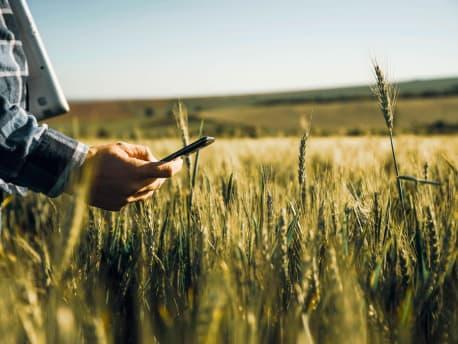 Mann mit Mobiltelefon im Feld