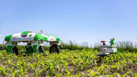 Roboter Dino im Feld