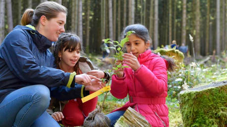 In the forest school children experience the forest ecosystem.