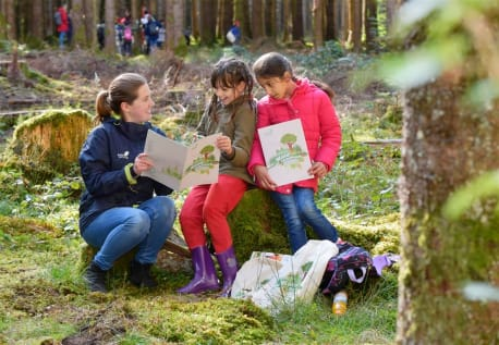 In the forest diary the children get to know tree, forest and animals.