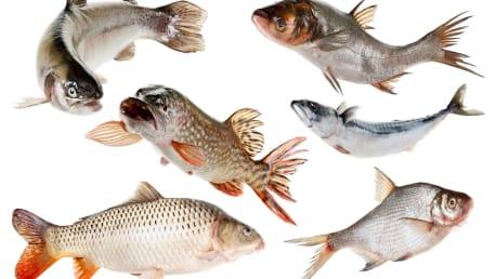 Fisch als wertvolles Lebensmittel für unsere Ernährung