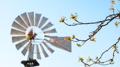 Blätter am Baum - Windstärke 2